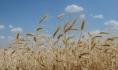 Без фитосанитарных документов растительную продукцию ввозить на территорию России запрещено.