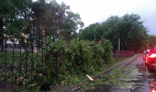 Сильный ветер может ломать деревья.