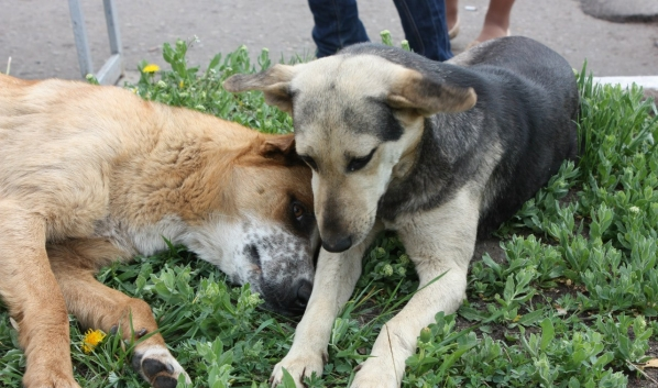 Собаки чаще всего болели бешенством.