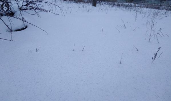 Снег усыпан сажей от семечек.