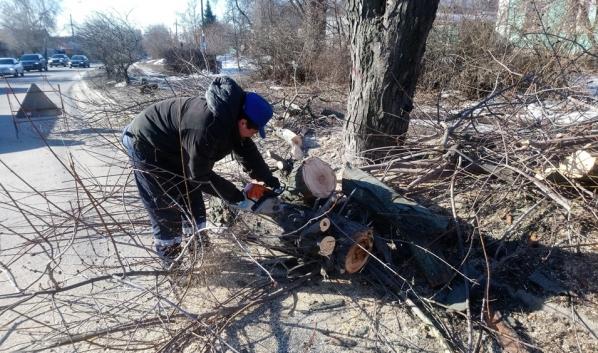 Начали вырубать и обрезать деревья.