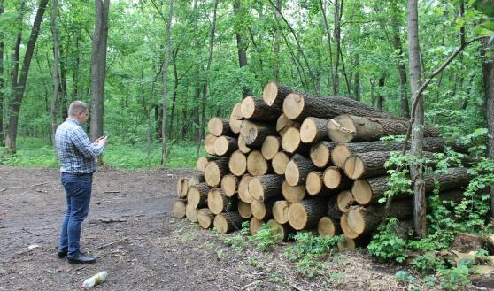 Вырубают деревья.