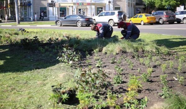 В Воронеже высаживают многолетние растения.