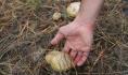 Люди травятся грибами.