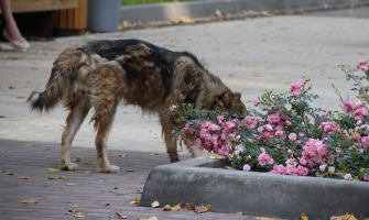 В парке высадили розы.
