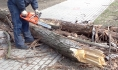 Спасатели ликвидируют последствия падения деревьев.