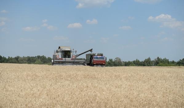 Сбор урожая в Воронежской области.