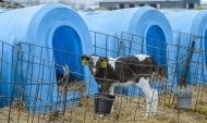 Наша область в лидерах по производству молока.