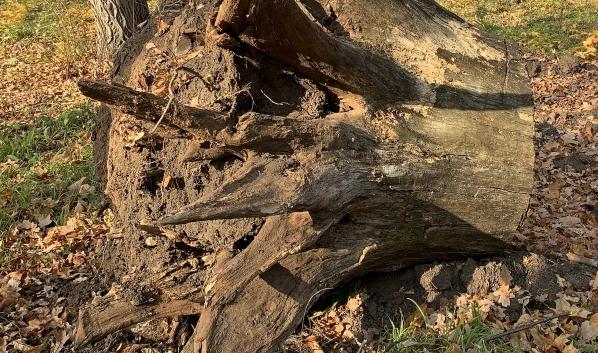 Деревья незаконно вырубили.