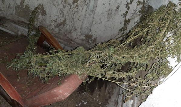 У мужчины изъяли наркотические растения.