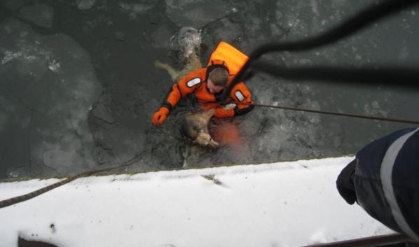 Спасение собаки Баси.