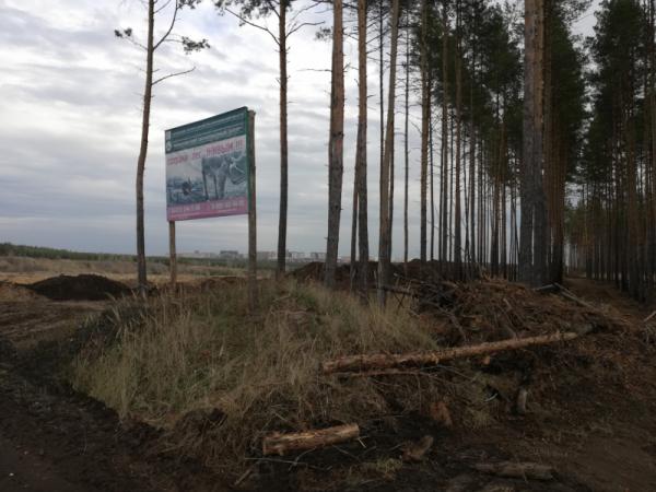 Лес вырубали.