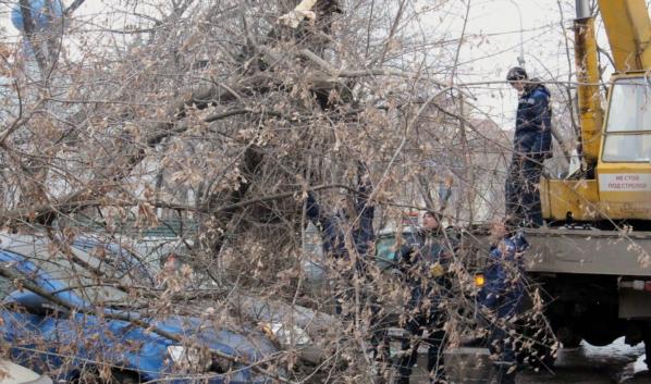 Сильный ветер может повалить деревья.