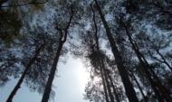Последняя неделя зимы в Воронеже.