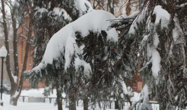 Снегопады придут в Воронежскую область.