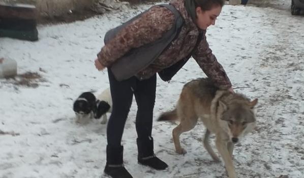 Волк Балто.