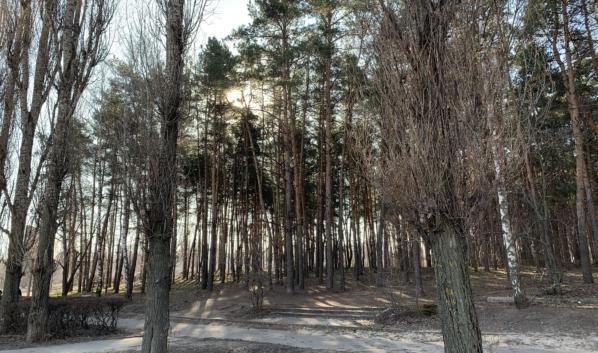 После прогулки по лесу проверьте себя на наличие клещей.