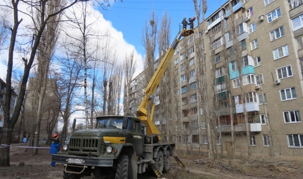Санитарная обрезка деревьев в Воронеже.