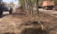 Грейдер повредил несколько деревьев.