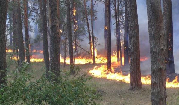 Воронежцев предупреждают о чрезвычайной пожароопасности.
