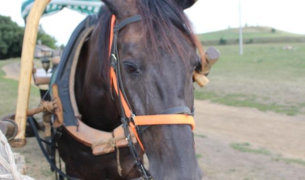 Девушка хотела продать лошадь.