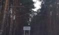 Северный лес.