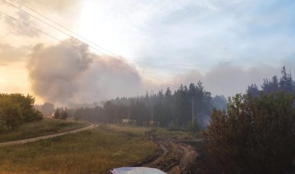 В Воронежской области горят леса.