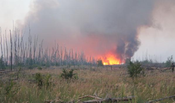 Особенно опасны лесные пожары.