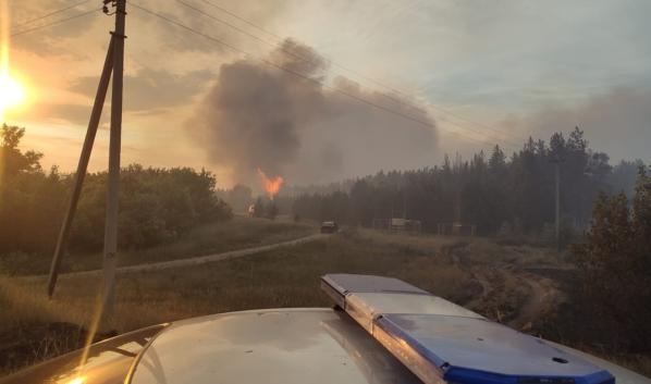 Лесной пожар в Воронежской области.