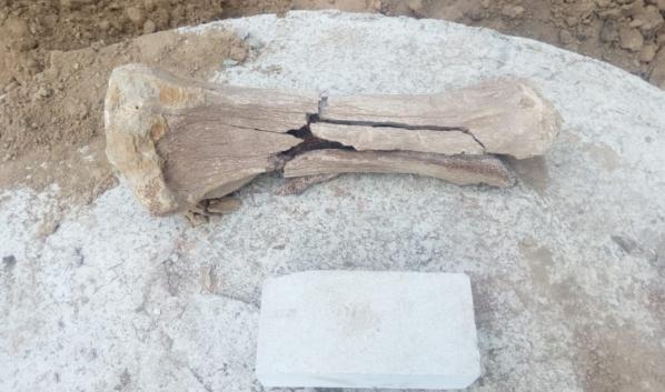 Рабочие нашли кость мамонта.