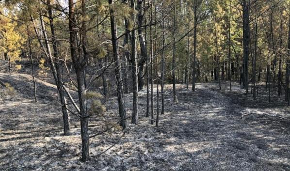 После пожара в Лискинском районе.