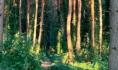 Северный лес в Воронеже.