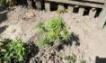 Эти растения могут стоить воронежцу свободы.