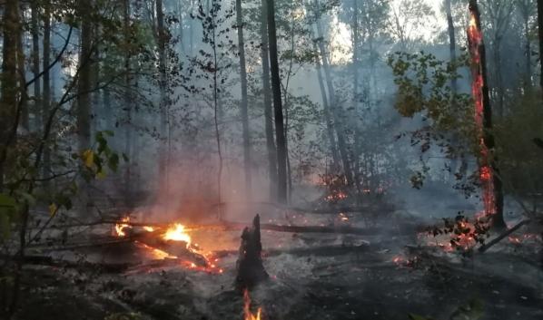 Пожар случился в заповеднике.