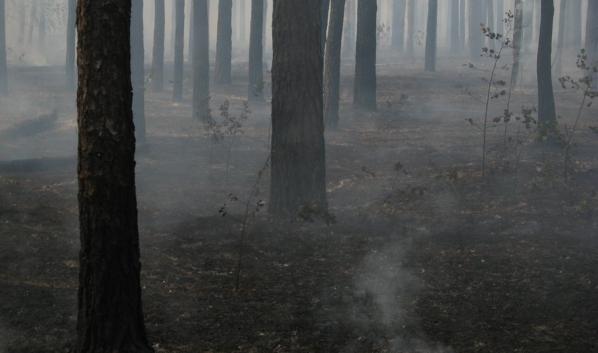 Пожары случились в лесничествах.