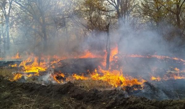 Стала известная причина пожара в Хоперском заповеднике.