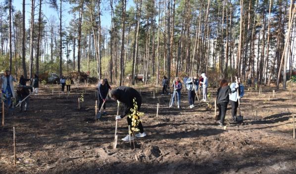 Саженцы берез высаживают в Северном лесу.