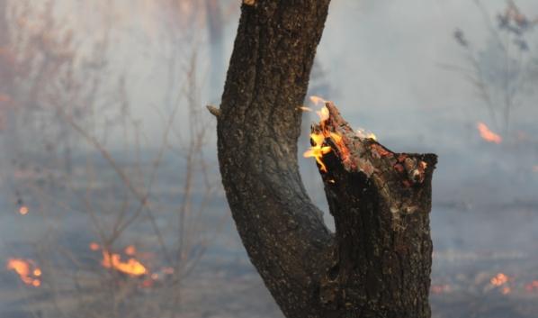 Пожары полыхают в Воронежской области.