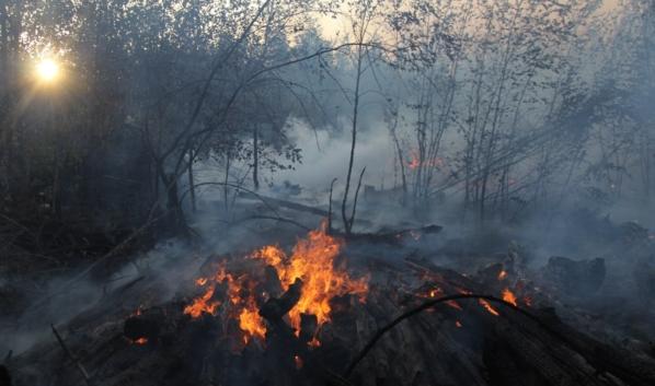 Пожары в Воронежской области.