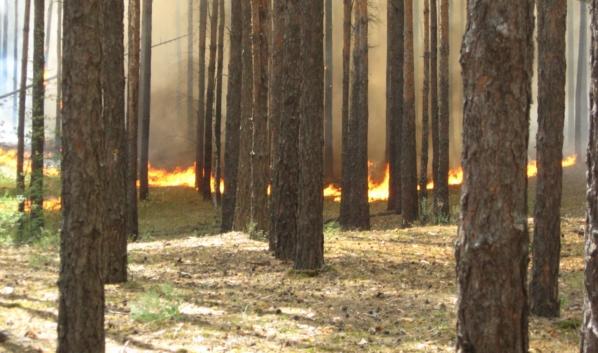 Огонь остановили до того, как он дошел до Подгорного.