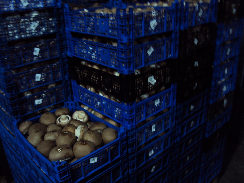 На рынке нашли подозрительные грибы.