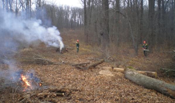 В лесничествах сжигают древесные отходы.