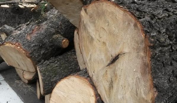 Мужчина срубил деревья.