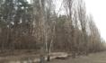 Пенсионер отправился за ёлкой в лес.
