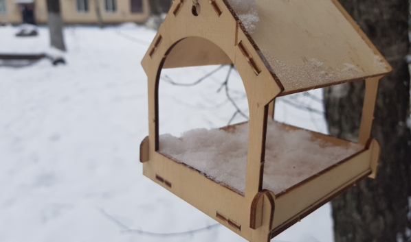 В Воронеже откроют стационар для диких птиц и летучих мышей.