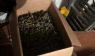 У парня изъяли коробку марихуаны.