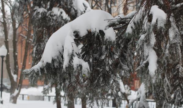 Зима возвращается в Воронеж.