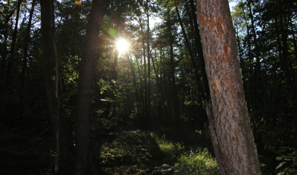 В лесах и парках воронежцев поджидают клещи.