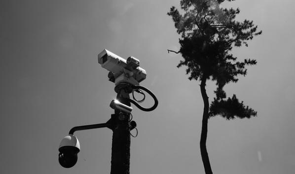 «Умные» камеры могут спасти леса.