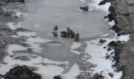 В Воронежской области прогнозируют заморозки.